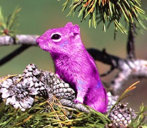 Pink_Squirrel_by_NayruAsukei-vi
